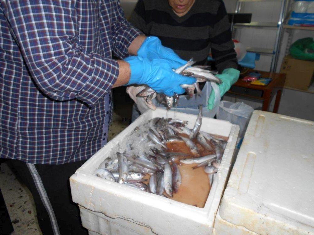 διανομη ψαριων κοινωνικου παντοπωλείου